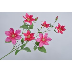 Clematis Tak Beauty 94 cm