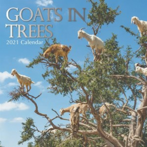 Kalender 2021 Goats in Trees